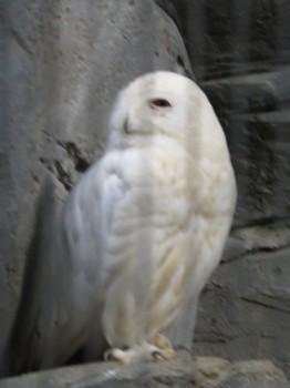 20180916彼氏とランチ&初上野動物園デート その7