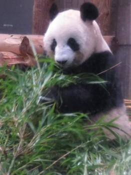 20180916彼氏とランチ&初上野動物園デート その9